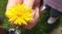 flower-symmetryresized